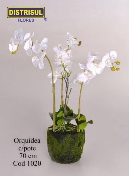 1020 - Orquídea