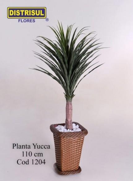 1204 - Planta Yucca