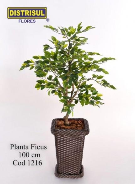 1216 - Planta Ficus