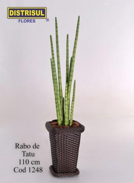 1248 - Rabo de Tatu