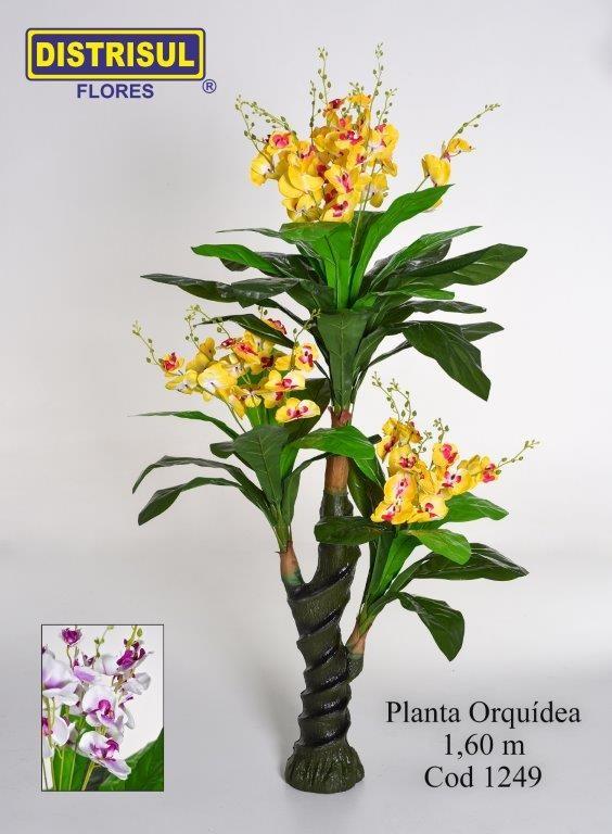 1249 - Orquídea