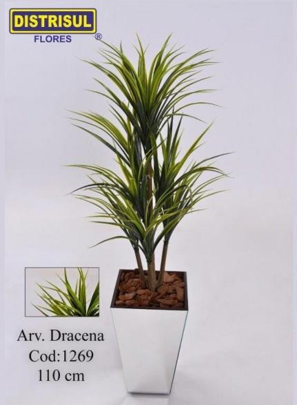 1269 - Dracena