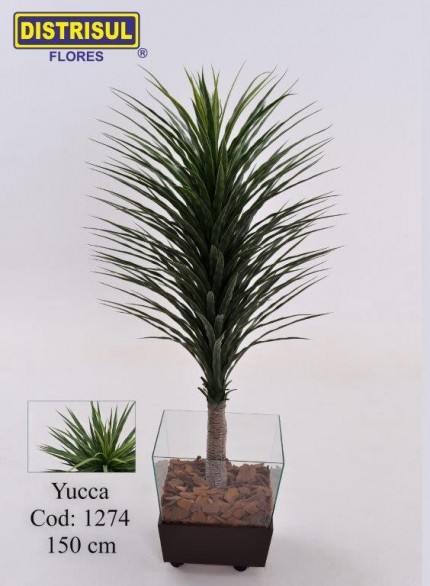 1274 - Yucca