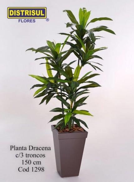 1298 - Planta Dracena