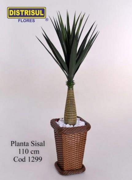 1299 - Planta Sisal