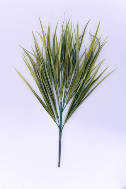 1181 - Grass