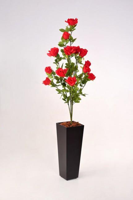 1604 - Planta de Rosas