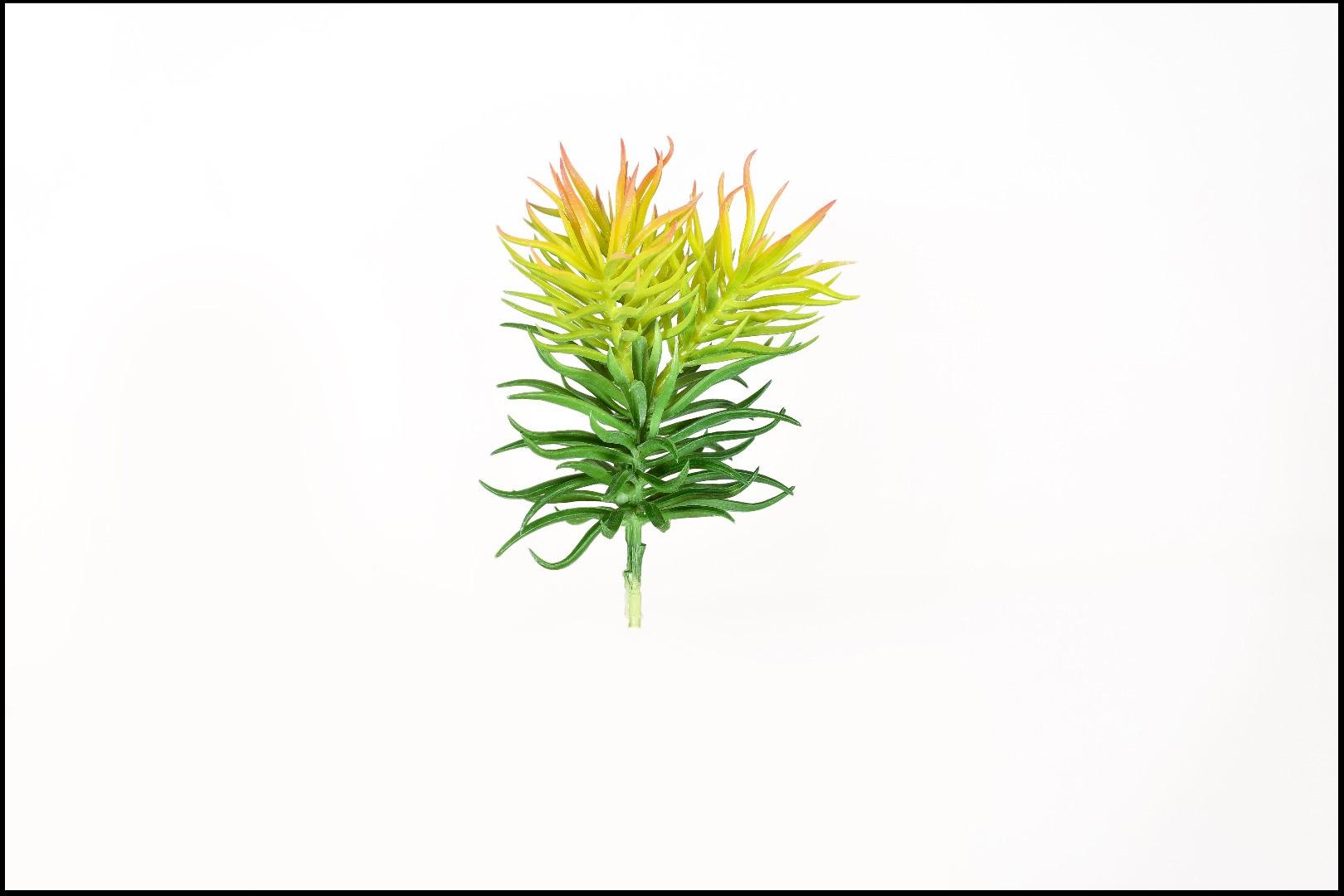 1737 - Cactus