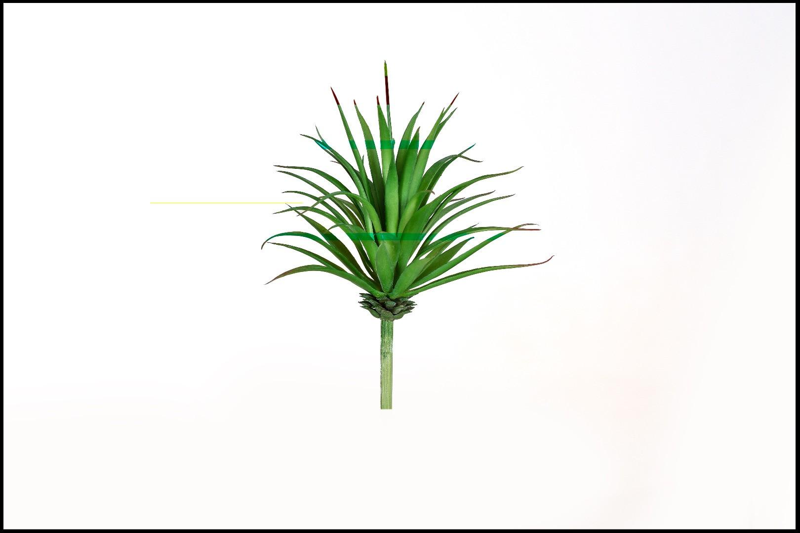 1738 - Cactus