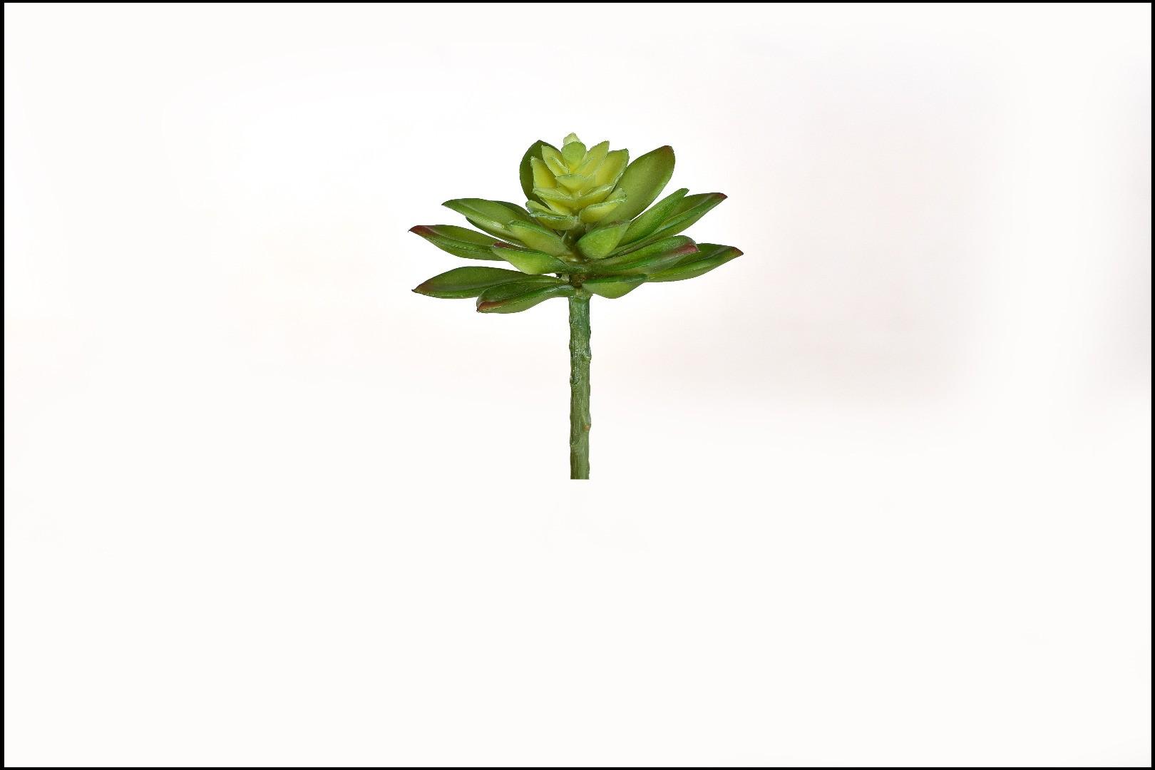 1740 - Cactus