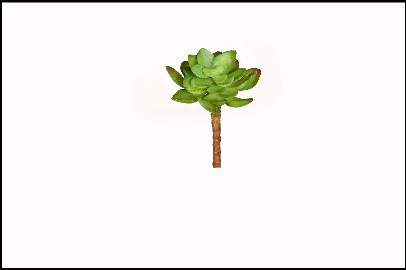 1733 - Cactus