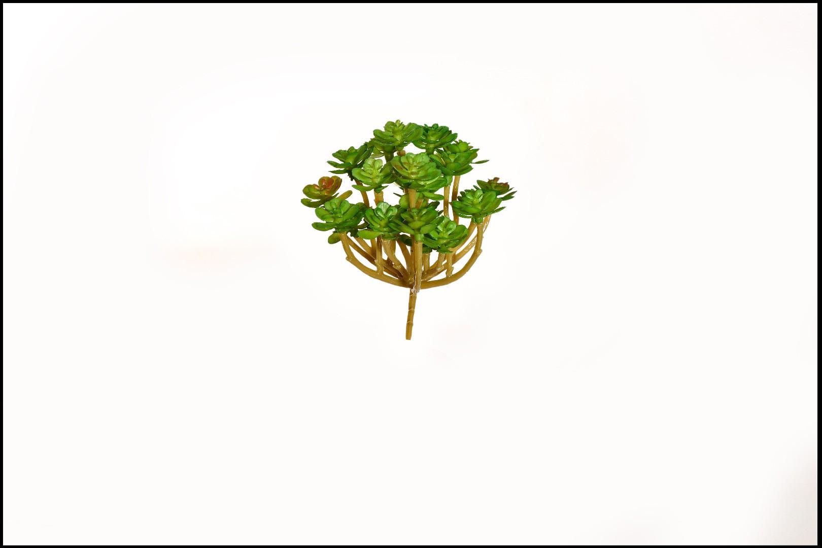 1745 - Cactus