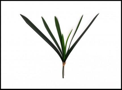 1731 - Folha de Orquídea - 80 Cm