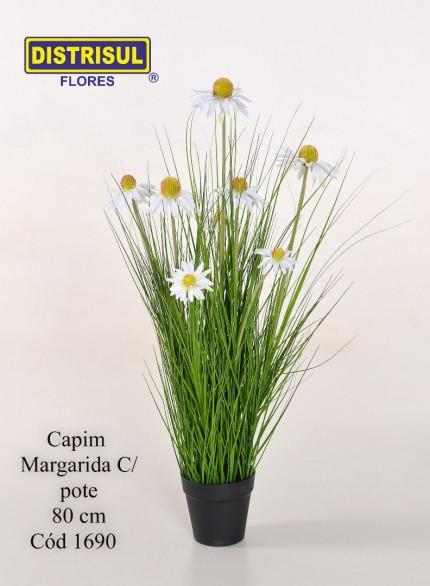 1690 - Capim Margarida C/ Pote - 80 Cm