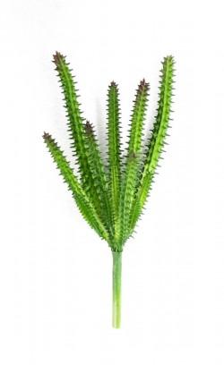 Cactus - 4630